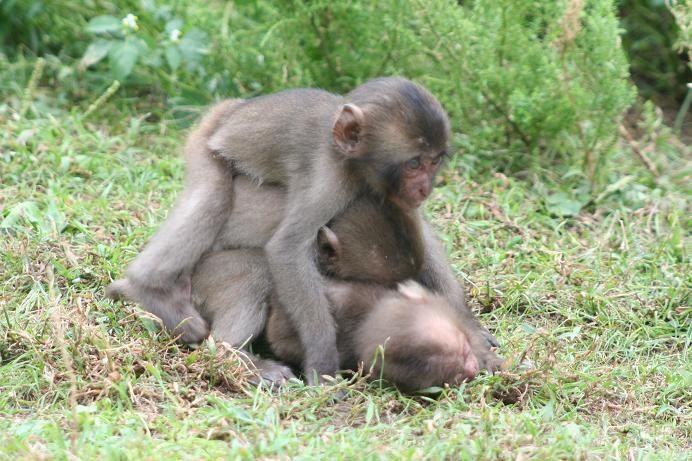 猿の画像 p1_13
