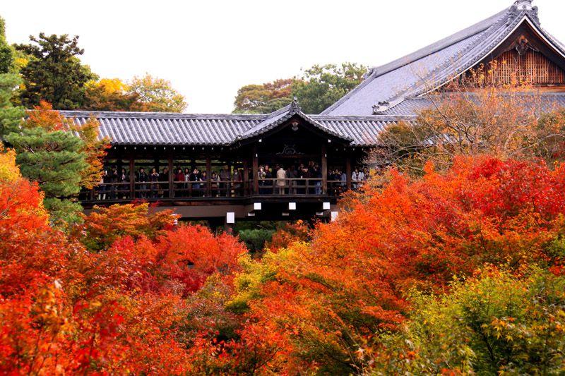 お寺とマッチした紅葉画像。