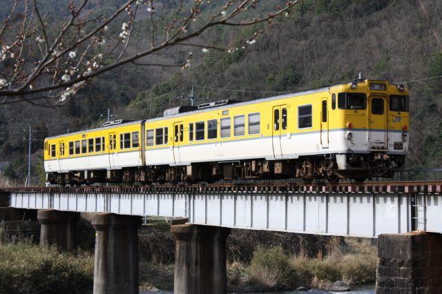 [大きい写真で見る]芸備線 狩留家-白木山 キハ47広島色の快速と梅のコ... 芸備線と可部線|