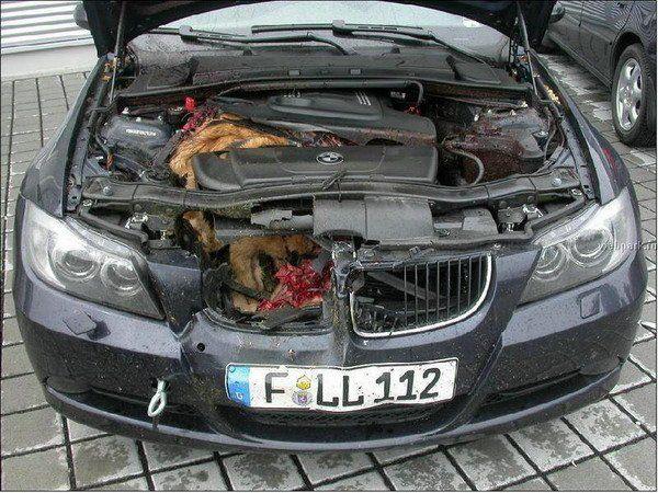 Volvo v70 blackstar sns - Accident de voiture coup du lapin ...