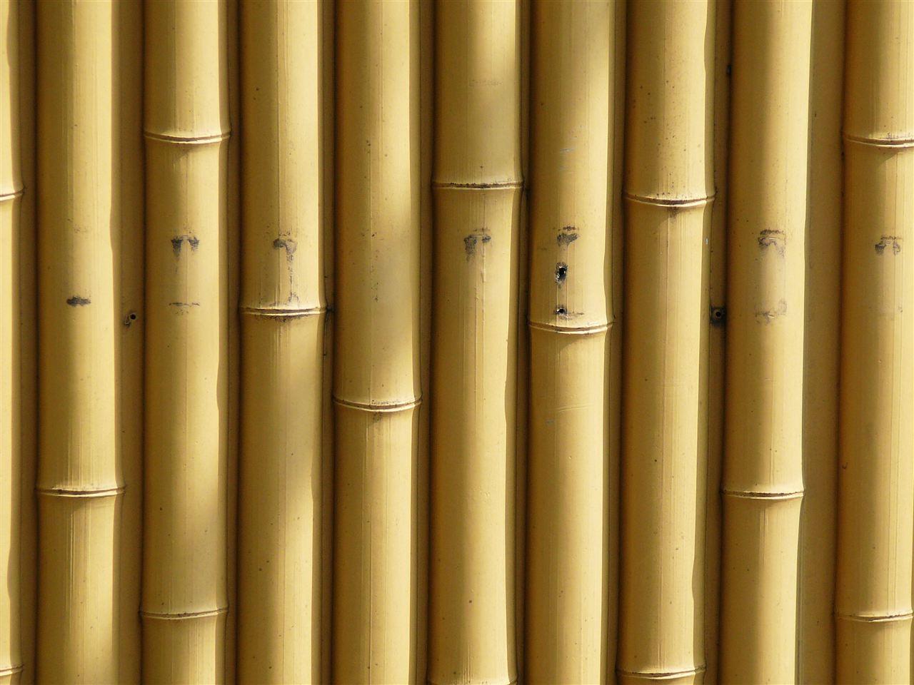 Bambu jakkarat
