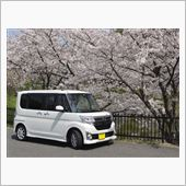 桜とTanToの画像