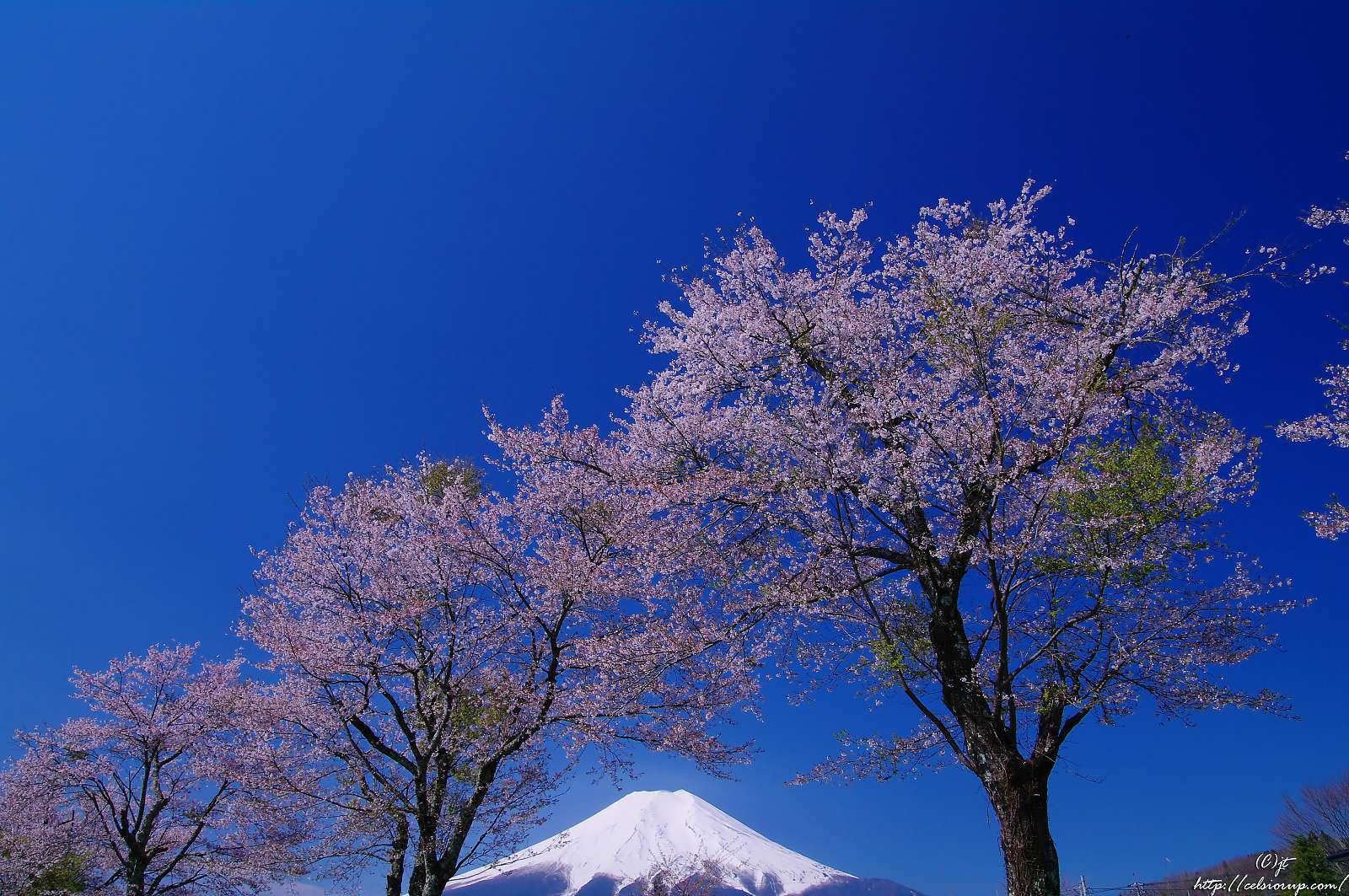 (9) (8)(9)とも前回は富士山が雲隠れしてアウトだった構図。 (... 【蔵出し】冨士と新