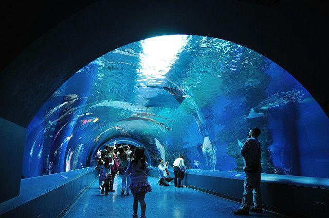 トンネル型の水槽がある水族館