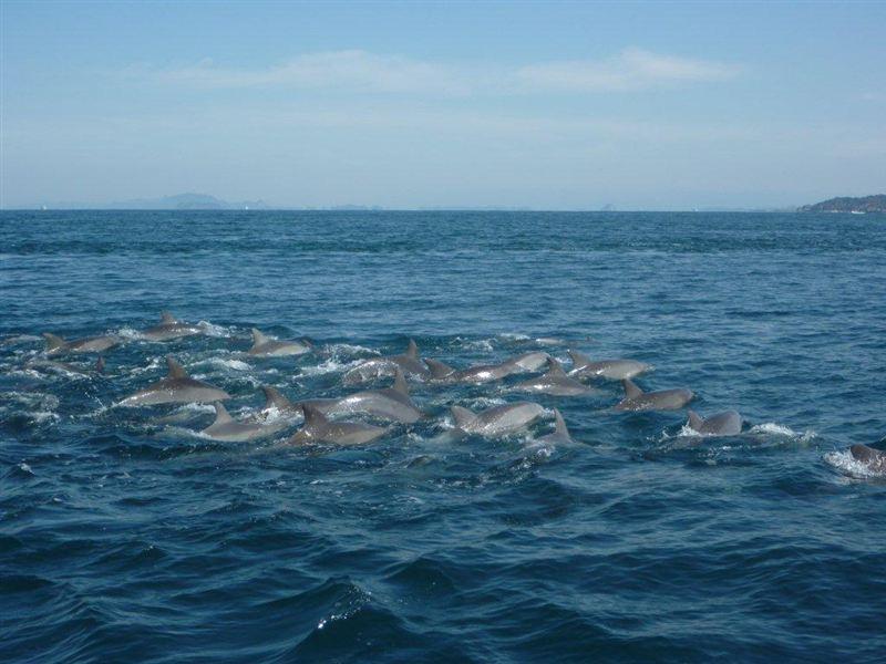 熊本県天草の五和町沖合の海域には、潮流と起状にとんだ海底によって魚類の... 車・自動車SNS(