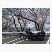 乙コロさんの愛車:ハーレーダビッドソン ソフテイル FXS ブラックライン