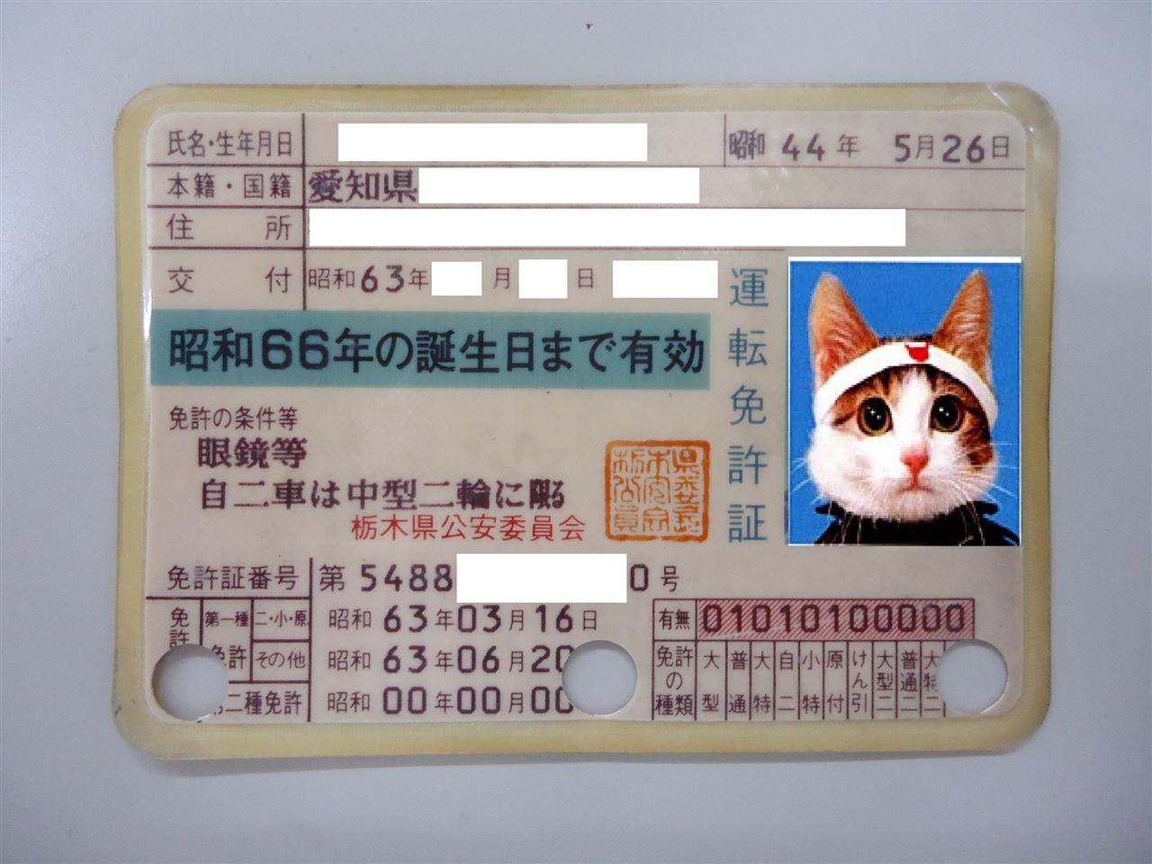 初めて更新した時の運転免許証です。 一枚物のラミネートになりました。 ...  車・自動車SNS