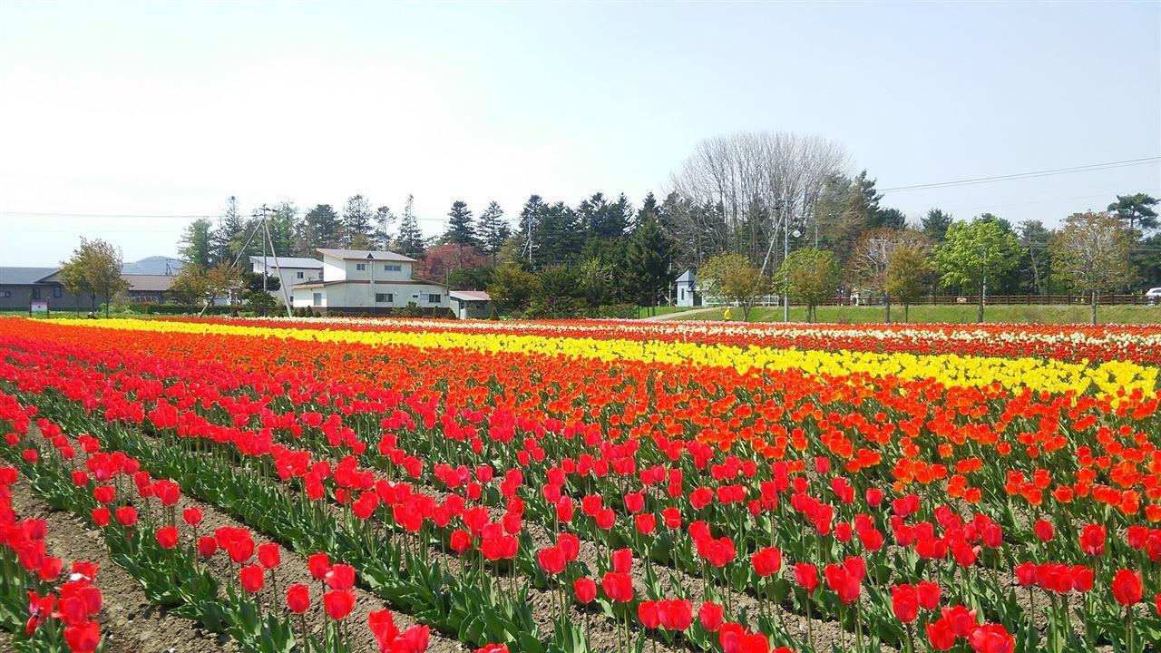 上湧別町のチューリップ公園は広大な敷地に多品種のチューリップが。 紋別市の先代ガリンコ号と 宗谷
